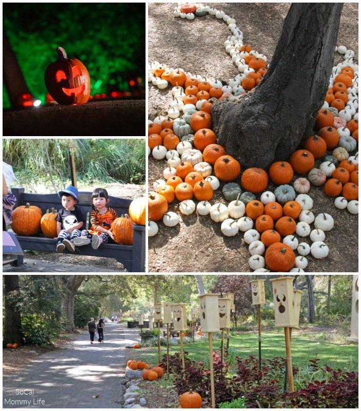 Descanso Garden Carved Pumpkin patch